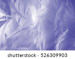 Purple Color Trends Feather...