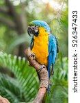 Colourful Parrots Bird Sitting...