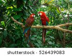 Parrots   Jungle Island  Miami...