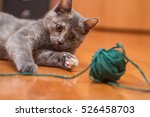 Stock photo cat playing with ball of yarn 526458703