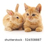 Stock photo red cat and rabbit isolated on a white background 526508887