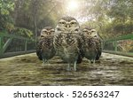 three owls over a bridge of...   Shutterstock . vector #526563247