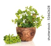 Small photo of Ladys mantle herb in an olive wood mortar with pestle and leaf and flower sprig, isolated over white background with reflection. Alchemilla vulgaris.