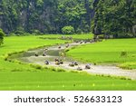 """rice field and river """"ngo dong"""" ... 