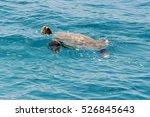 green sea turtle swimming in... | Shutterstock . vector #526845643