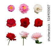 colection of nine beautiful red ... | Shutterstock . vector #526905007