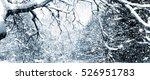 Frozen Tree In Winter.