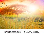 nature background concept ... | Shutterstock . vector #526976887