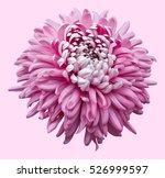 A Single Pink Pompom Type...