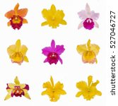 Collage Of Colorful Cattleya...
