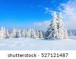 green nice new year fir trees... | Shutterstock . vector #527121487