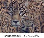 Digital Painting Of Leopard...