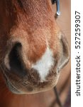 Sorrel Horse Nose