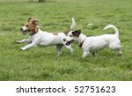 Two Happy Running Dogs On Gree...