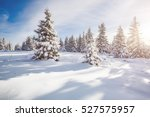 great white spruces glowing by... | Shutterstock . vector #527575957