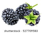blackberry isolated on white... | Shutterstock . vector #527709583