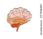 human brain mind icon vector... | Shutterstock .eps vector #527908387