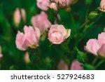 Little Pink Roses Vintage Styl...