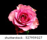 Pink Rose Black Background