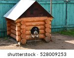 Stock photo a dog in a kennel animal shelter 528009253