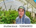 salinas  california  usa   june ...   Shutterstock . vector #528060853