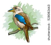 Color Kookaburra Bird Vector...