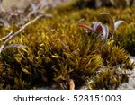 title   a plant on the surface | Shutterstock . vector #528151003