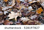 Frozen Leaves On The Ground In...