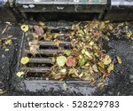 Autumn Leaves On City Drain...