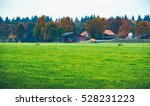 Dutch Farm With Field In Front...