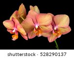 close up of multicolor orchid... | Shutterstock . vector #528290137