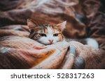 Three Colored Cat Sleeping On ...