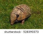 close up of armadillo.... | Shutterstock . vector #528390373