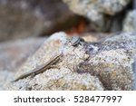 Two Little Lizards Climbing On...
