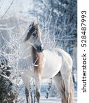 andalusian white horse winter... | Shutterstock . vector #528487993