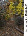 Secret Autumn Passage