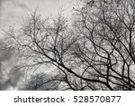 leafless tree branches with... | Shutterstock . vector #528570877