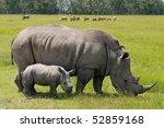 White Rhinoceros With 2 Weeks...