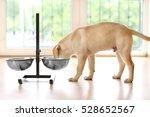 golden labrador dog eating from ... | Shutterstock . vector #528652567