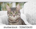 cute cat in soft pet bed  close ... | Shutterstock . vector #528652633