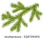 Green Fir Branch With Short...