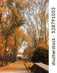 park alley in autumn city park | Shutterstock . vector #528791053