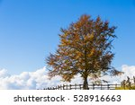 landscape | Shutterstock . vector #528916663