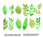 set of herbs and leaves painted ... | Shutterstock . vector #529034947
