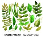 set of herbs and leaves painted ... | Shutterstock . vector #529034953