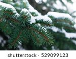 A Few Green Fir Tree Branches...