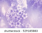 Stock photo flower on soft pastel color in blur style 529185883