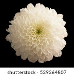 White Chrysanthemums On A Blac...