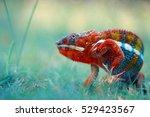 Reptile  Reptiles  Chameleon ...