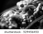 macro photography of plants and ... | Shutterstock . vector #529456453